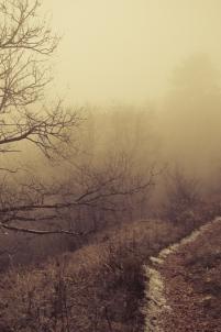 arbre, aventure, balade, bourgogne, brouillard, conte, falaise, fantasmagorique, fantomatique, fixin, france, hiver, merveilleux, paysage, portrait, promenade, rêve,