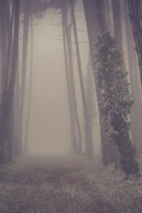 arbre, aventure, balade, bourgogne, brouillard, conte, falaise, fantasmagorique, fantomatique, fixin, france, hiver, merveilleux, paysage, portrait, promenade, rêve,